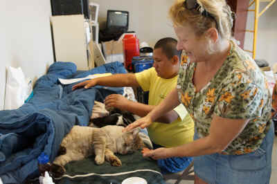 Cat Caretaker, Kim Walsma, captures her long time feral friend for the Humane Society of Yuma's free fixing, shots and ear mite remedy on Saturday, 19 October 2013. Walsma harbored a contagious ringworm condition many wild cats share with humans.