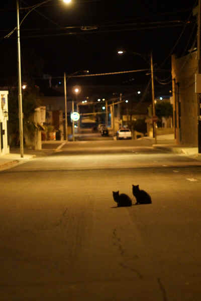 Two silhouetted feral cats sit parked on 2nd Street in downtown Yuma, Arizona near Jimmie Dee's Bar late after Saturday night party goers went home on this early Sunday morning. In 2009 estimates of one feral cat for every two Yuma citizens existed for a total of 45,000 roaming wild the streets.