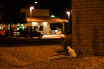 A white feral cat sits comfortably by Attorney John Minore's office ready for a late Saturday night snack in Mr G's fruitful dumpster. The tipped left ear indicates this wild feline has been spayed in the Trap-Neuter-Return (TNR) program that reduces the cat population, noises and smells amongst Yuma, Arizona's community.