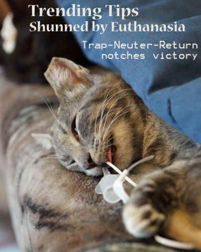 Trending Tips Shunned by Euthanasia Trap-Neuter-Return notches victory