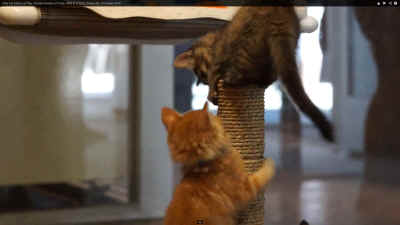 Kittens at Play video